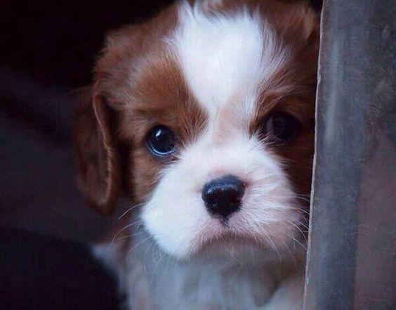 Soooooo cute...right!?