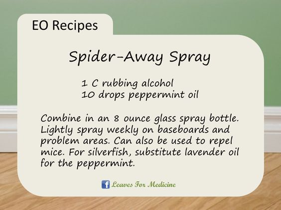 Spider-Away Spray: Repel spiders, mice, silverfish, and more with pure peppermint essential oil! Get pure essential oils for your home at www.mydoterra.com/JessicaCieslak. Be sure to message Jessica at www.facebook.com/LeavesForMedicine for specials happening now, and to learn how easy it is to take back your family's health the natural way!