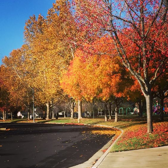 There is always, always, something to be grateful for..     The colors of fall in Pleasanton - Silicon Valley. California