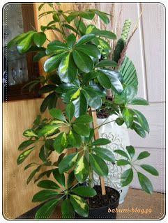 Babcia radzi coś...: Naturalne dokarmianie roślin: