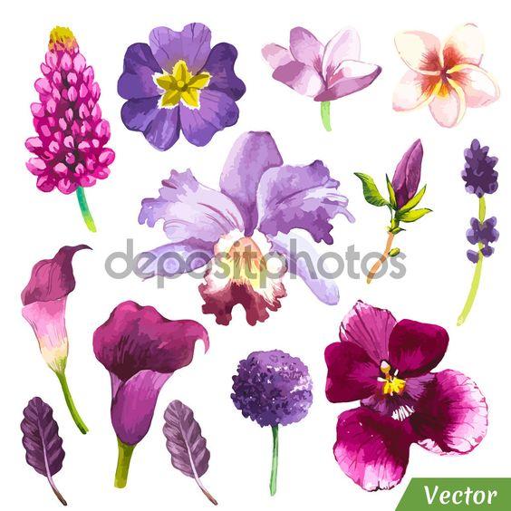 Ilustración vectorial de flores acuarelas. - Ilustración de stock: 81721414