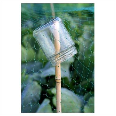Recycled glass jar jam on bamboo cane with netting for pest control