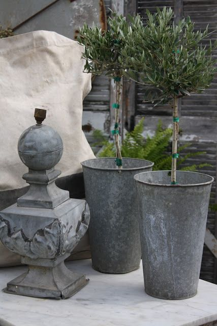 olive trees galvanized containers