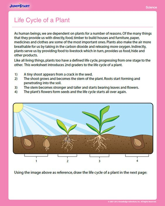 Life Cycle of a Plant Free Science Worksheet for 2nd Grade – Science Worksheets for 2nd Grade