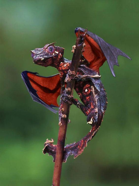 Leaf опашка Gecko --looks като змей: