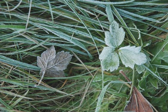 littlenestbox: early morning frost