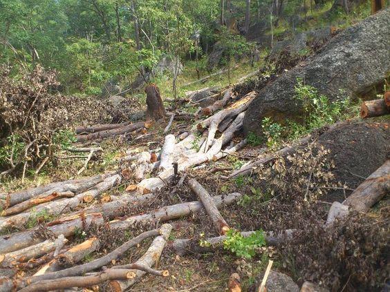 Illegal logging - devastating deforestation Zambia.