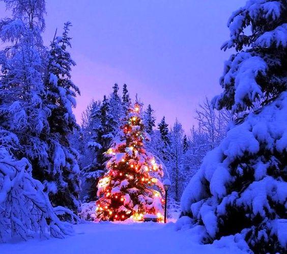 Outdoor Lighted Christmas Treesputa-timor-nian   -- Outdoor ...:Outdoor Lighted Christmas Treesputa-timor-nian,Lighting