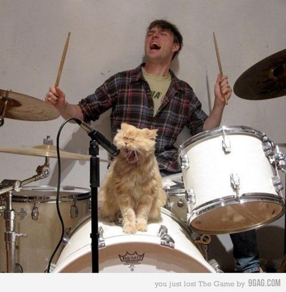 Katzen Jammer