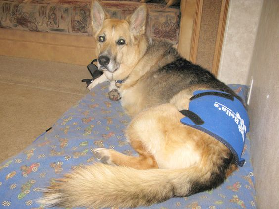 Hot, Cold Therapy Pack Options for Post-Surgery #Tripawd Dogs, Cats