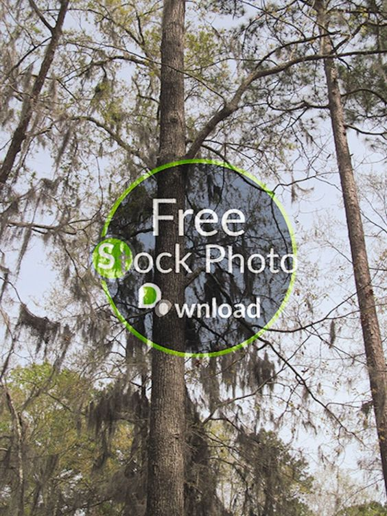 Download Free Photo - Portrait of Tree - Trees and TrunksFree and Public Domain Stock Photo Download