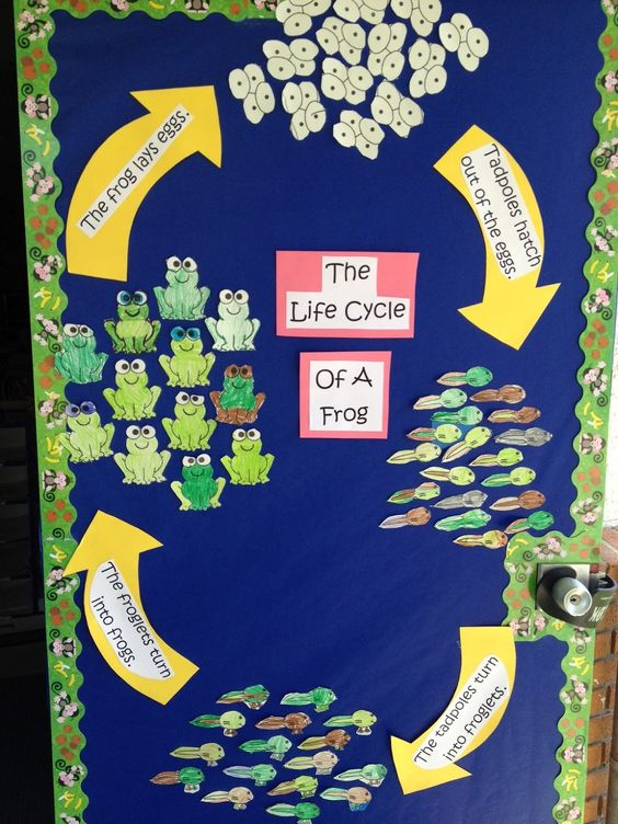 Life cycle of a frog and ADORABLE frog book!! Great for my Frog theme.