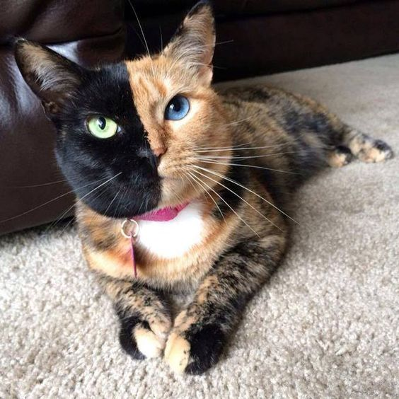Very cool Cat!