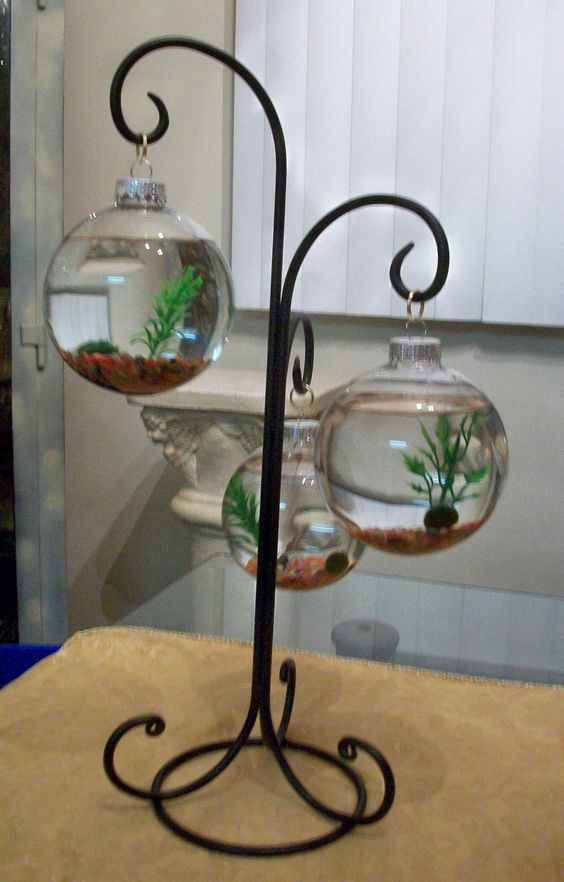 Marimo moss ball terrarium mixture of small by for Moss balls for fish tanks