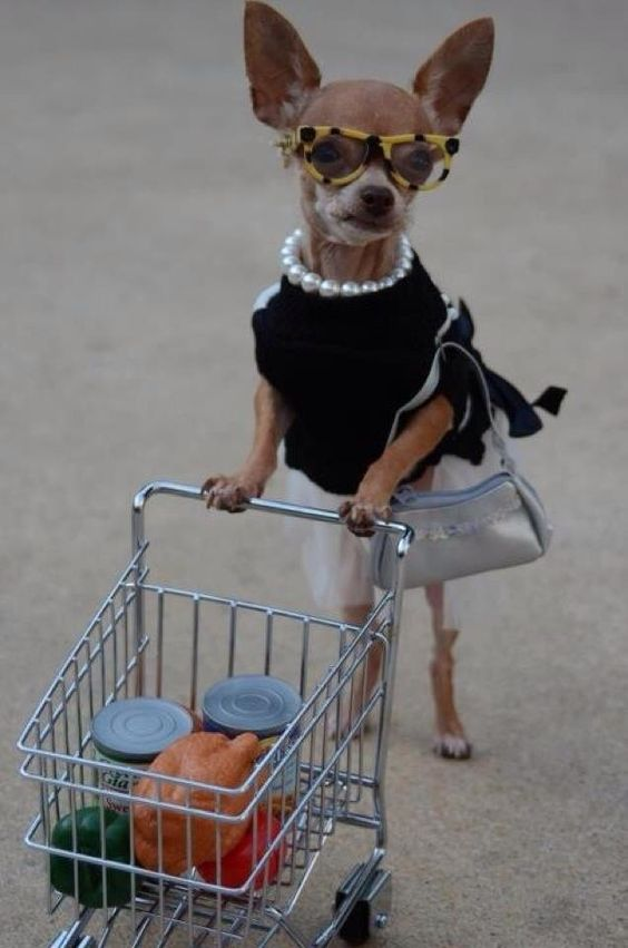 """I only shop for what's on sale!"" #dogs #pets #Chihuahuas Facebook.com/sodoggonefunny"