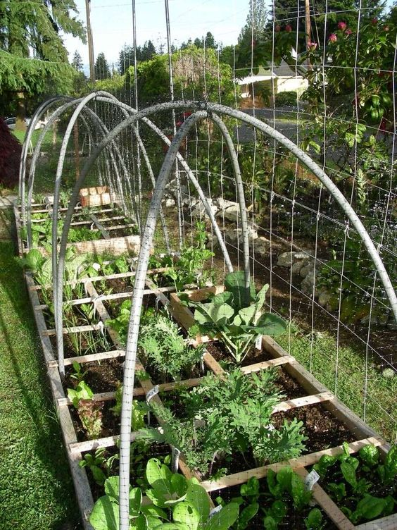 Square Foot Gardening Forum  Square Foot Gardening Forum Gardening  Pinterest Square feet. Square Foot Gardening Forum