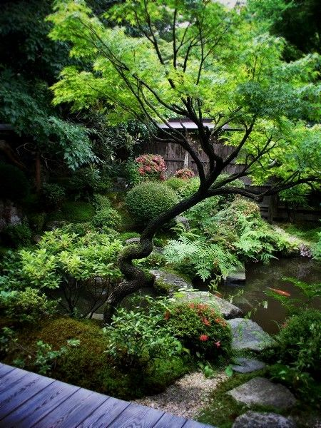 Gardens beautiful and backyard ponds on pinterest for Small japanese ponds
