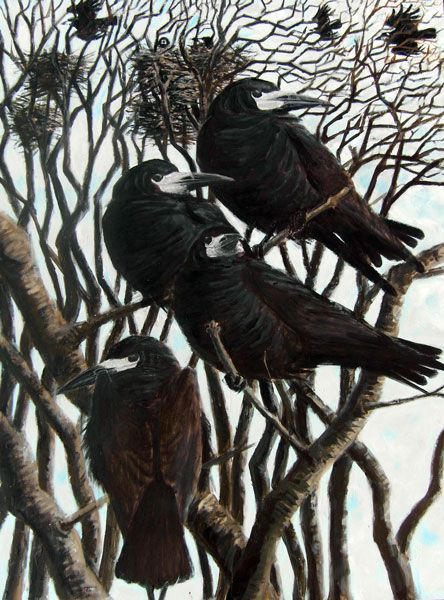 "Crows Ravens Rooks: ""Rooks at Kergord,"" by Howard Towll."