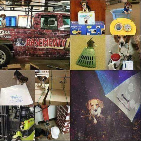 """Hey friends, please go to the Tar Heel Basement Systems Facebook page and """"like"""" this pic to help me win a contest!"""
