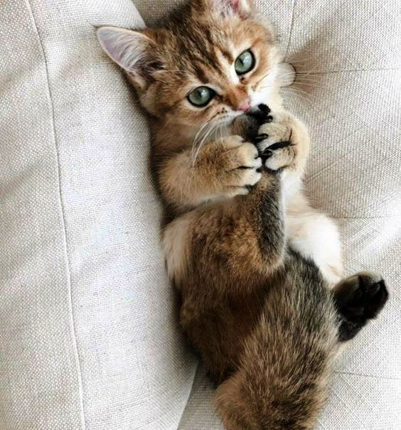 Kittens Near Me To Adopt Little Cute Animals Pictures To Color And Print Where Kittens For Free Jhb Cute Baby An Cute Cats Photos Cute Cats Cute Cats And Dogs