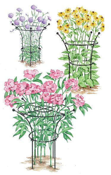 Essex Plant Supports For My Peonies Gardening