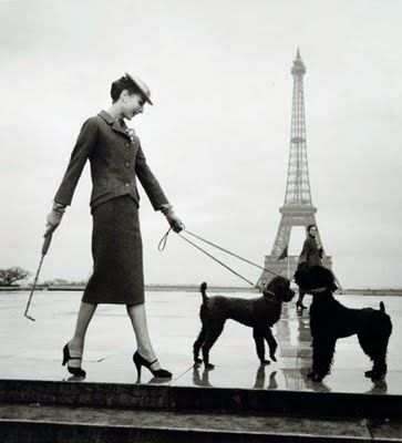 French poodles in Paris