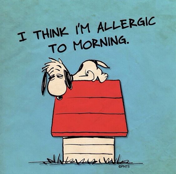 Snoopy...not a morning person