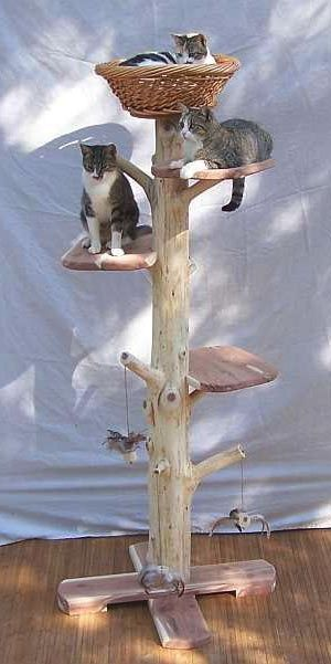 Ok, who's got a long, fallen tree branch like this one that I can have? I want to make this! Natural Cat Tree for-the-home:
