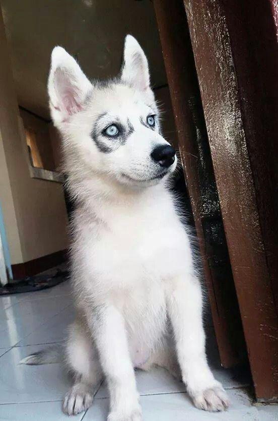 Aww too cute. Those eyes