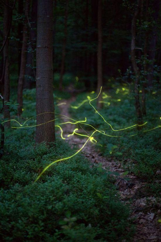 Amazing Fireflies Photos