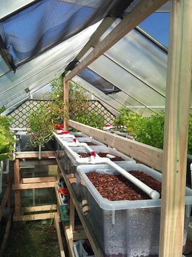 Aquaponics greenhouses and balconies on pinterest for Balcony aquaponics