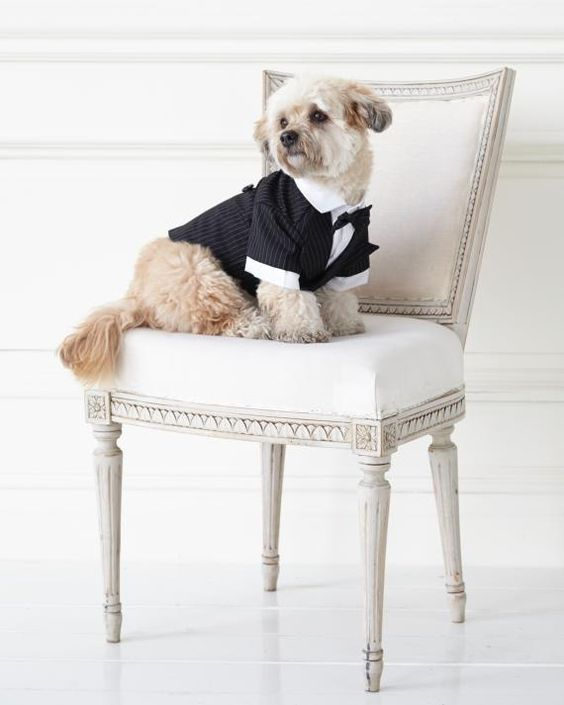 35 Ways To Ensure Your Dog Is The Guest Of Honor At Your Wedding Wedding Pets Martha Stewart Pets Pet Friendly Weddings