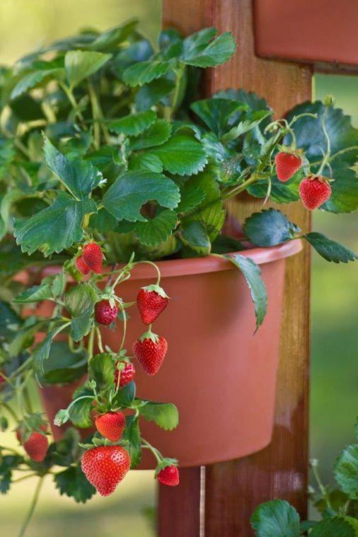 Fruitful Container Gardens