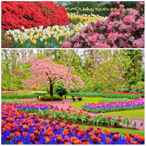 Daqui Dali» Arquivo do Blog » Bem vinda, Primavera!