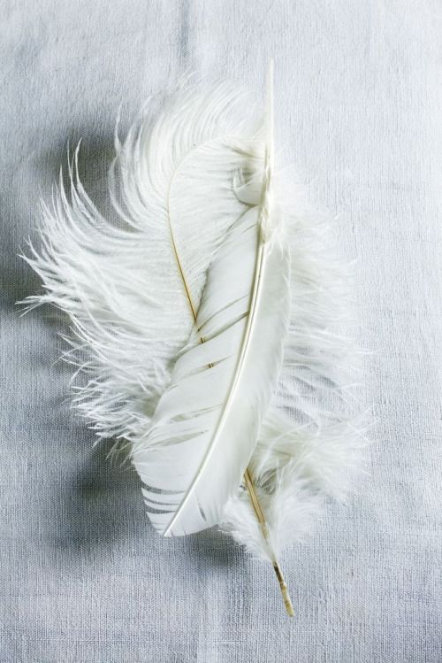 white feather falling in the blue sky an pink flour