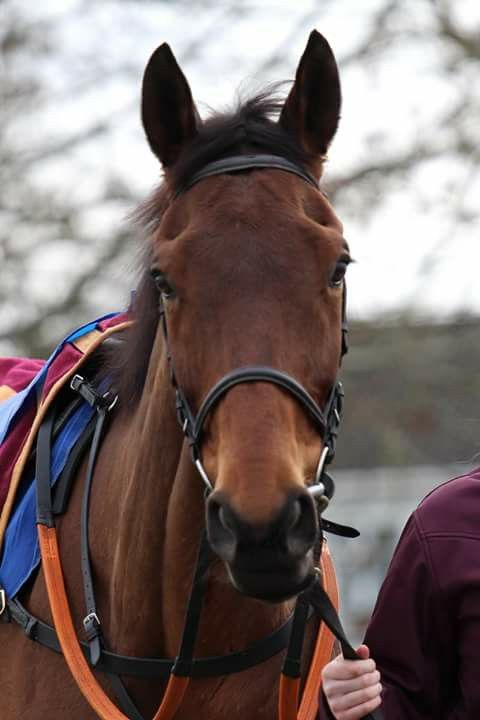 Happy retirement to Rule The World, winner of the 2016 Grand National.
