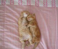 Sweet Dreams Kittens
