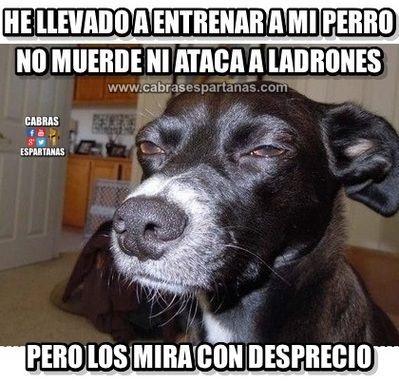 Entrenar Al Perro Ya Los Mira Mal Funny Dog Pictures Funny Animal Memes Animal Memes