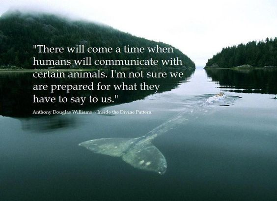 """""""There will come a time when humans will communicate with certain animals. I'm not sure we are prepared for what they have to say to us.""""  ~A. D. Williams~"""