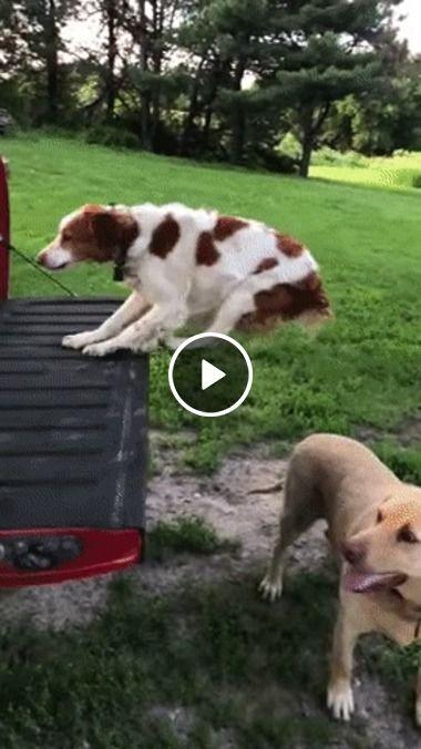 Cachorro treinando para pular sem caí