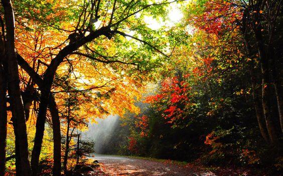 sendero del bosque iluminado fondo de pantalla