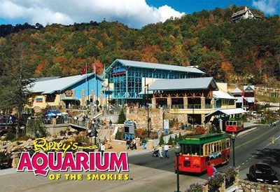 Ripley's Aquarium in Gatlinburg, TN - Went here on a family vacation! Had a great time and the shark tunnel was AMAZING!!!!! Not to mention the kids LOVED it!!!