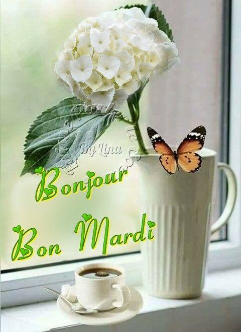 Bonjour Bon Mardi Peace Love Understanding Messages