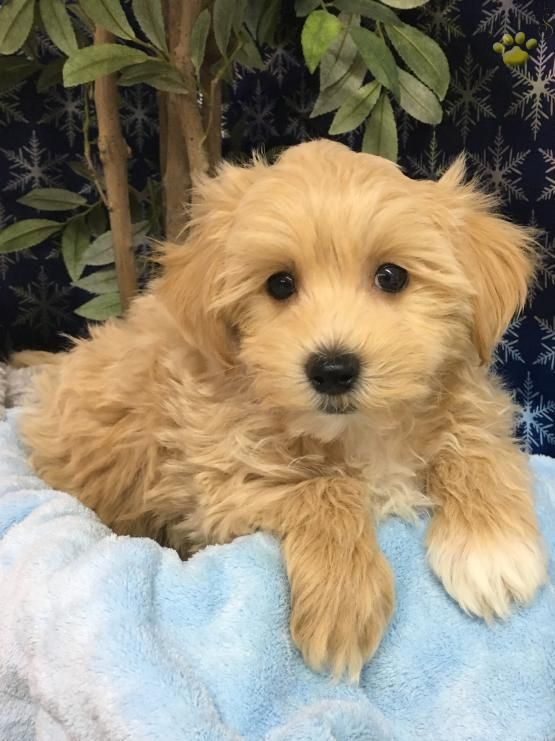 Cute Puppies And Kittens By Rabeth Walker On Cute Animals