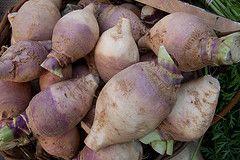 Légumes anciens d'hiver : comment les préparer ? Le crosne, le panais, le rutabaga et le topinambour