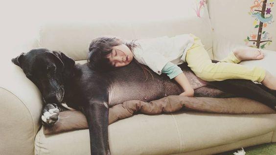 #グレートデン #greatdane #超大型犬 #れむ by asamiberry.815