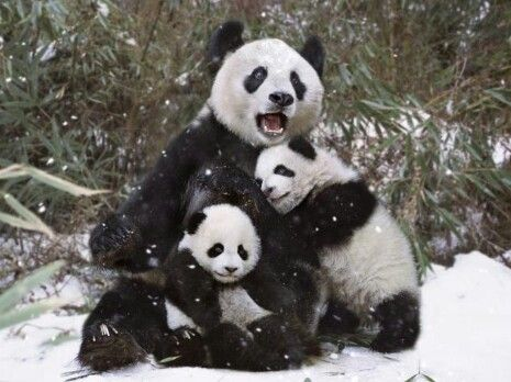 Family Portrait- totally adorable!