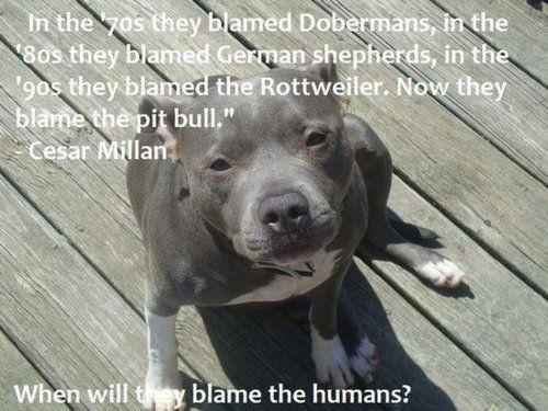 When will we blame the humans? #cesarmilan, #doberman, #germanshepherd, #rottweiler, #pitbull