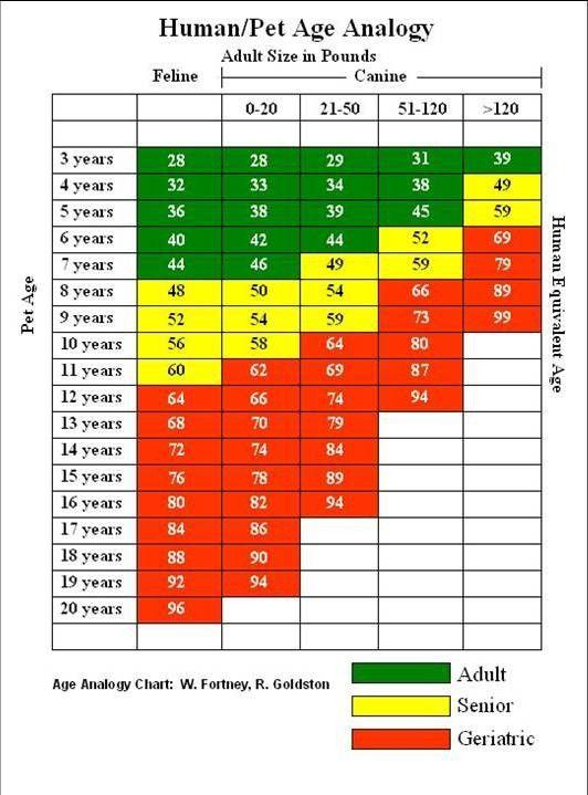 Chihuahua Puppy Weight Chart : chihuahua, puppy, weight, chart, Dog-age-analogy-chart.jpg, 532×719, Pixels, Chart,, Ages,, Fancy