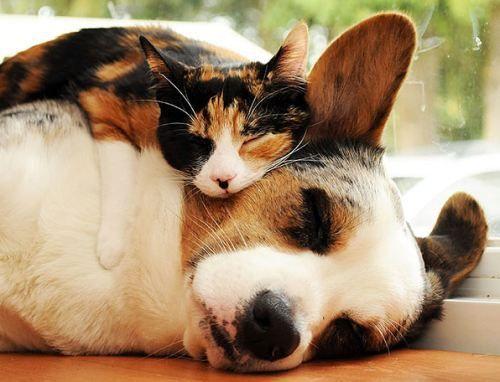 25 Animaux adorables qui se servent d\u0027oreillers entre eux, du câlin en  pagaille !